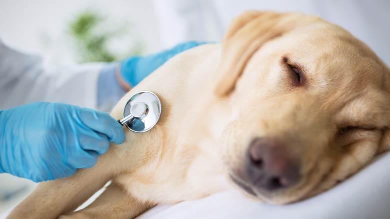 Oncologia Veterinária – Uma esperança para os animais com câncer