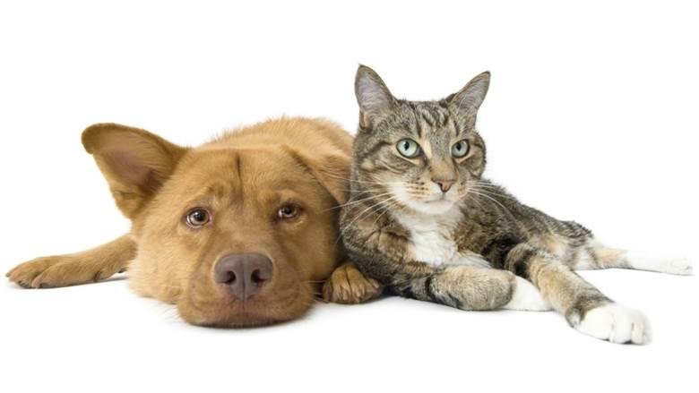 Suplementos naturais para cachorros e gatos