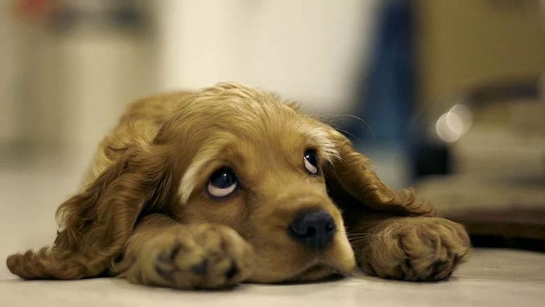 10 sinais de alerta de Câncer em cachorros