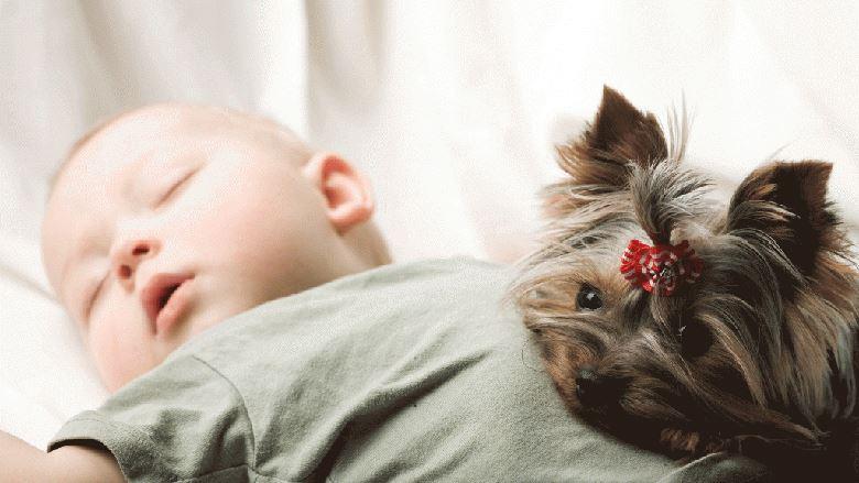 Como preparar seu cachorro para a chegada de um bebê?