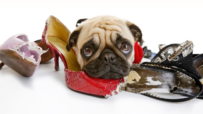 Como fazer meu cachorro parar de morder meus sapatos?