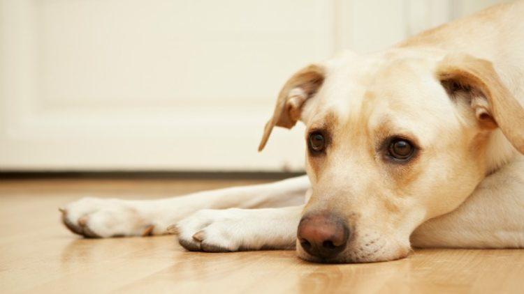 Como a oncologia veterinária pode salvar a vida dos pequenos animais?