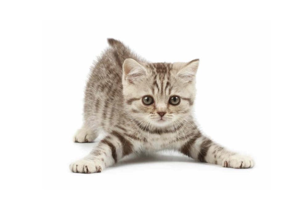 Você conhece a personalidade do seu gato?